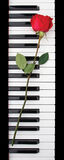 Red rose on piano Stock Photo