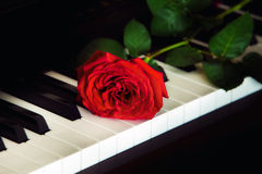 Red rose on the piano Royalty Free Stock Photo
