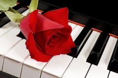 Red Rose on Piano Royalty Free Stock Image