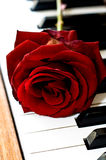 Red rose on the piano Royalty Free Stock Photos