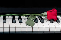 Red rose on a piano. Red rose on a black piano Royalty Free Stock Photos