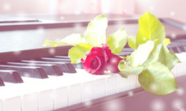 Red rose on piano. Abstract and blur background. Royalty Free Stock Image