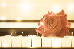 Red rose on piano key. Stock Photo
