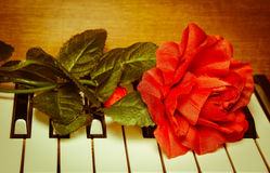 Red rose on piano keyboard. Love and passion for the music. Red rose on piano keyboard. Vintage background stock image