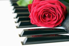 Red rose on piano keyboard. Love song concept, romantic music.  royalty free stock photos