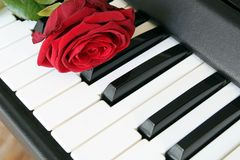 Red rose on piano keyboard. Love song concept, romantic music.  royalty free stock photography