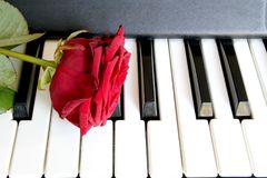 Red rose on piano keyboard. Love song concept, romantic music.  Stock Photo