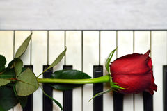 Red rose on piano keyboard Stock Image