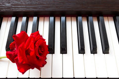 Red rose on piano keyboard. Royalty Free Stock Image