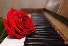 Red rose on piano keys Royalty Free Stock Image