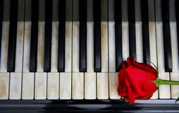 Red rose and keys. Red rose and piano keys Stock Image