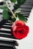Red rose on piano keys Stock Photos