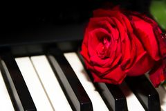 A red rose on the piano keys royalty free stock images