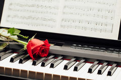 Red rose on piano keys Stock Photo