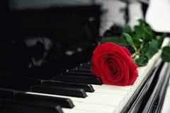 Red rose on piano keys,. Closeup Royalty Free Stock Photography
