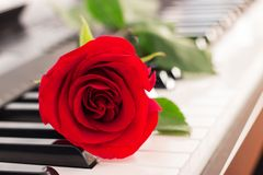 Red rose piano keys romantic background. royalty free stock photography