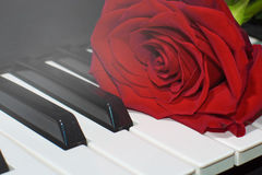 Red rose on piano keys Stock Images