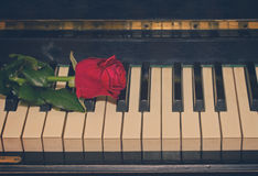 Red rose  on piano Stock Image