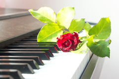 Red rose on piano. Stock Images