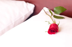 Red rose on a pillow Stock Photo