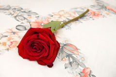 Red rose on pillow Royalty Free Stock Images