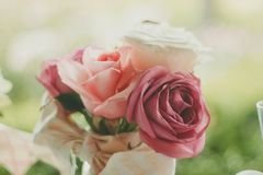 Red Rose Pink Rose and White Rose in Close Up Photo Royalty Free Stock Photography
