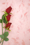 Red rose on pink texture paper place for your text Royalty Free Stock Photo