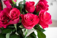 Red roses bouquet with a pink touch. Indoors with white background. stock photos