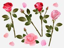 Red rose. Plant love flowers beautiful red buds with green leaves vector herbal illustration collection stock illustration