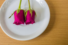 Red rose on plate Stock Photos