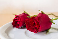 Red rose on plate Stock Images