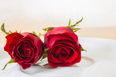 Red rose on plate Royalty Free Stock Images