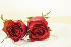 Red rose on plate Stock Photography