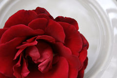 Red Rose on Porcelain. Details of red rose on soft coloured white porcelain Stock Images