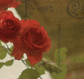 Red Rose Postcard. Red roses with vintage postcard effect taken in England in 2014 Royalty Free Stock Image
