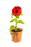 Red rose in a pot Royalty Free Stock Image