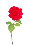 A red rose present Royalty Free Stock Photos