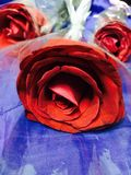 Red rose.... royalty free stock photo