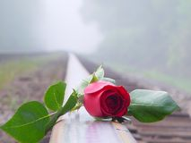 Red rose on railroad tracks 2. Close-up of long stem red rose laying across rail of railroad tracks stock photography