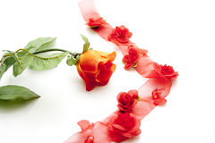 Red rose with red loop Stock Images