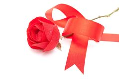 Red rose with red ribbon Stock Photography