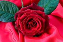 A red rose an the red satin Stock Image