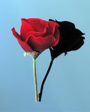 Red Rose Reflection. Red silk rose on black glass with mirror image stock photo