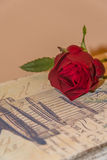 Red rose. A red rose on a retro background Royalty Free Stock Image