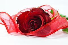 Red rose with ribbon Stock Photo