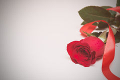 Red rose with ribbon on a light wooden background. Women' s day, Royalty Free Stock Photography