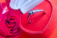 Red rose with a ring Stock Photography