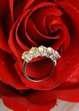Red rose and ring. Close up of diamond ring in red rose petals Royalty Free Stock Image