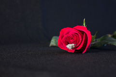 Red rose and ring. Antique diamond engagement ring resting inside a cut red rose Stock Images