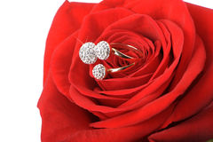 Red rose with a ring with jewels Stock Photography